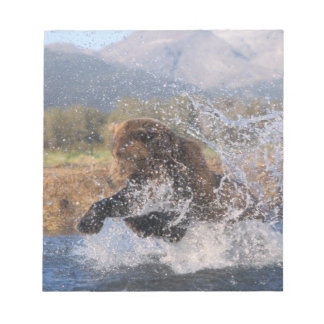 Brown bear, grizzly bear, catching pink salmon, notepad