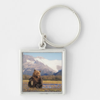 Brown bear, grizzly bear,  in riverbed with Silver-Colored square key ring