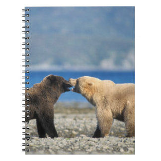 Brown bear, grizzly bear, play on the beach, notebook