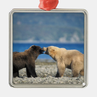 Brown bear, grizzly bear, play on the beach, Silver-Colored square decoration