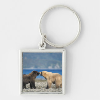 Brown bear, grizzly bear, play on the beach, Silver-Colored square key ring