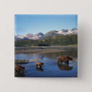 Brown bear, grizzly bear, sow and cubs in 15 cm square badge