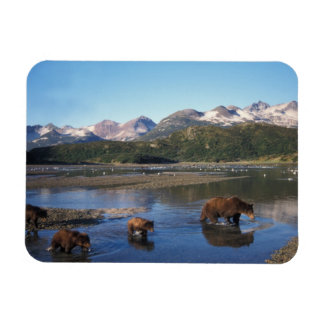 Brown bear, grizzly bear, sow and cubs in rectangular photo magnet