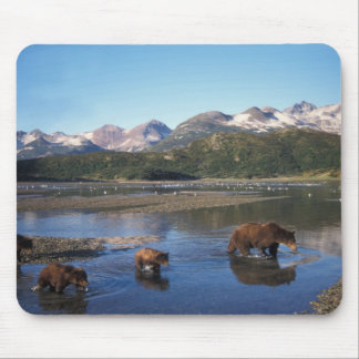 Brown bear, grizzly bear, sow and cubs in mouse mat