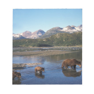 Brown bear, grizzly bear, sow and cubs in notepad