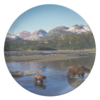 Brown bear, grizzly bear, sow and cubs in plate