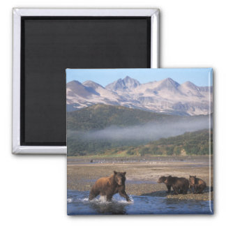 Brown bear, grizzly bear, sow fishing with cubs, fridge magnets