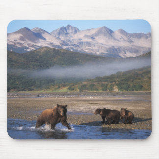 Brown bear, grizzly bear, sow fishing with cubs, mouse pad