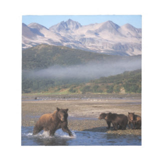 Brown bear, grizzly bear, sow fishing with cubs, notepad