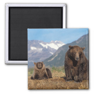 Brown bear, grizzly bear, sow with cub on magnet