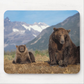 Brown bear, grizzly bear, sow with cub on mouse pad