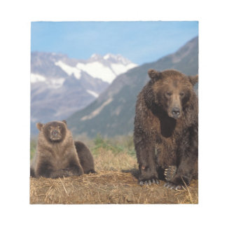 Brown bear, grizzly bear, sow with cub on notepad