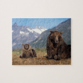 Brown bear, grizzly bear, sow with cub on puzzle