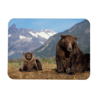 Brown bear, grizzly bear, sow with cub on rectangular photo magnet