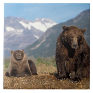 Brown bear, grizzly bear, sow with cub on tile