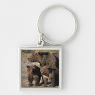 Brown bear, grizzly bear, sow with cubs looking key ring