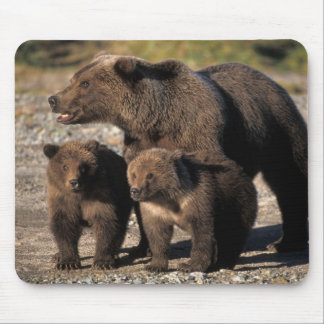 Brown bear, grizzly bear, sow with cubs looking mouse mat