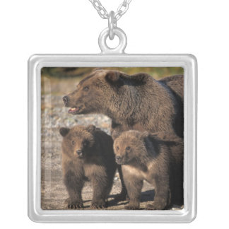 Brown bear, grizzly bear, sow with cubs looking silver plated necklace