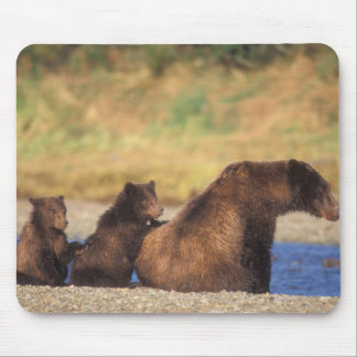 Brown bear, grizzly bear, sow with cubs, mouse pad