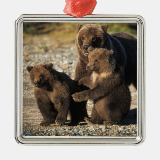 Brown bear, grizzly bear, sow with cubs on coast christmas ornament