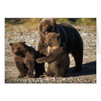 Brown bear, grizzly bear, sow with cubs on coast greeting card