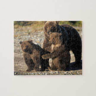 Brown bear, grizzly bear, sow with cubs on coast jigsaw puzzle