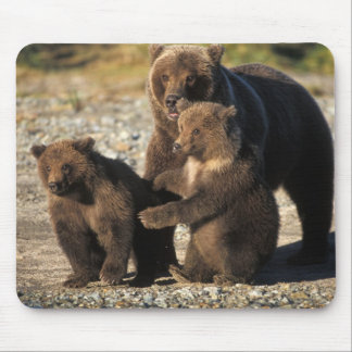 Brown bear, grizzly bear, sow with cubs on coast mouse mat