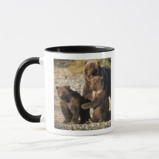 Brown bear, grizzly bear, sow with cubs on coast mug