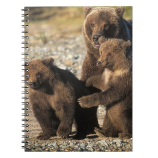 Brown bear, grizzly bear, sow with cubs on coast notebooks
