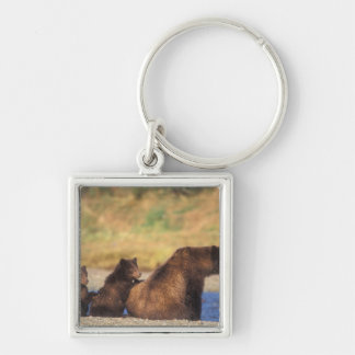 Brown bear, grizzly bear, sow with cubs, Silver-Colored square key ring