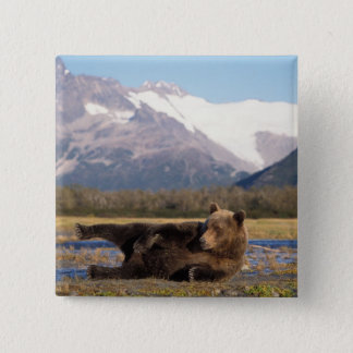 Brown bear, grizzly bear stretching on its back 15 cm square badge