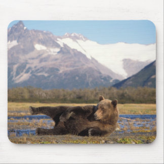 Brown bear, grizzly bear stretching on its back mouse mat