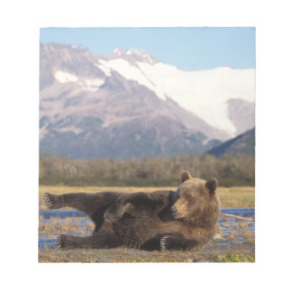 Brown bear, grizzly bear stretching on its back notepad