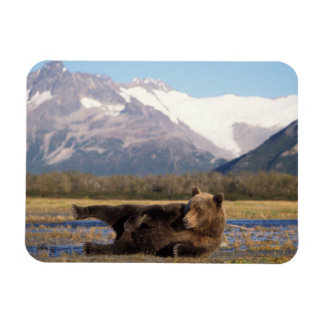Brown bear, grizzly bear stretching on its back rectangular photo magnet