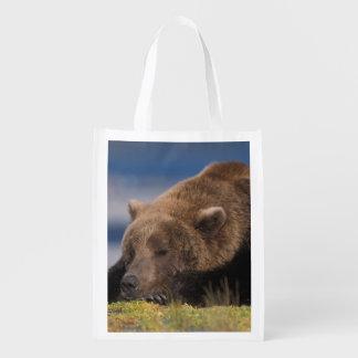 Brown bear, grizzly bear, taking a nap, Katmai