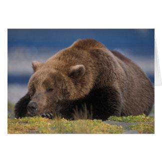 Brown bear, grizzly bear, taking a nap, Katmai Card