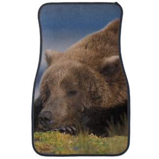 Brown bear, grizzly bear, taking a nap, Katmai Floor Mat