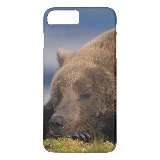 Brown bear, grizzly bear, taking a nap, Katmai iPhone 8 Plus/7 Plus Case