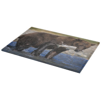 Brown bear, grizzly bear, with salmon catch, cutting board