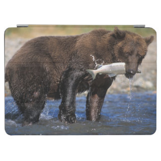 Brown bear, grizzly bear, with salmon catch, iPad air cover