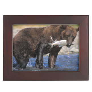 Brown bear, grizzly bear, with salmon catch, keepsake box
