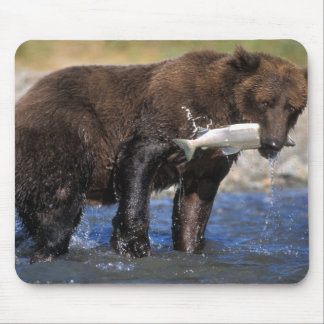 Brown bear, grizzly bear, with salmon catch, mouse pad