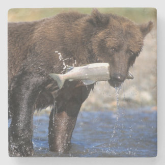 Brown bear, grizzly bear, with salmon catch, stone coaster