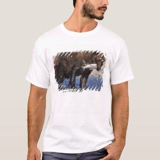 Brown bear, grizzly bear, with salmon catch, T-Shirt