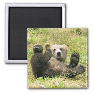 Brown_Bear_Kodiak_Lovers Gifts Fridge Magnets