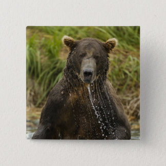 Brown bear, male, fishing for salmon 15 cm square badge