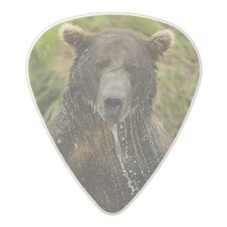 Brown bear, male, fishing for salmon acetal guitar pick