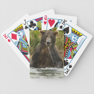 Brown bear, male, fishing for salmon bicycle playing cards