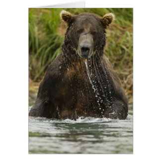 Brown bear, male, fishing for salmon card
