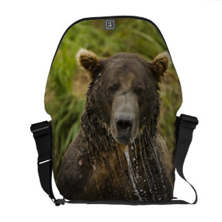 Brown bear, male, fishing for salmon courier bags